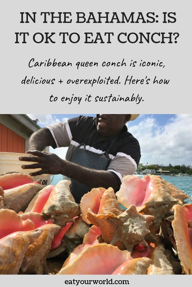 Conch in the Bahamas: It's iconic and delicious, but also overfished. Here's how to eat conch sustainably.
