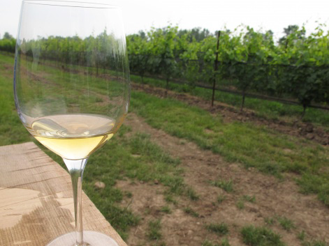 Glass of white wine on a Niagara-on-the-Lake vineyard
