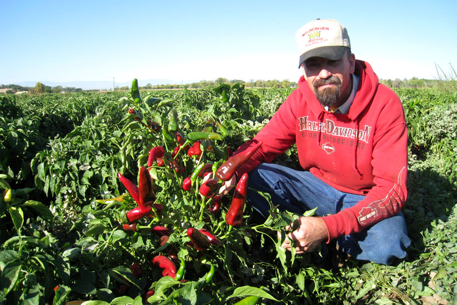Shane Milberger on his chile farm in Pueblo, Colorado